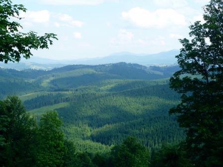 Фото природа, лес, говерла, карпаты