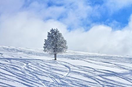 Заставки зима, дерево, склон, снег