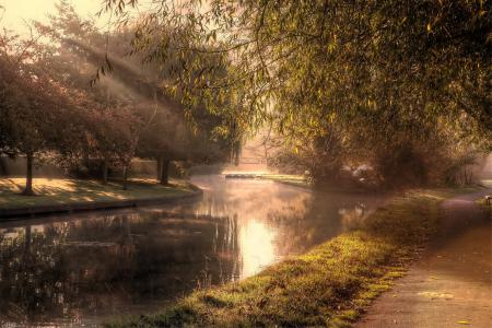 Картинки утро, парк, деревья, свет