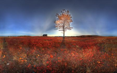 Заставки поле, дерево, свет, природа