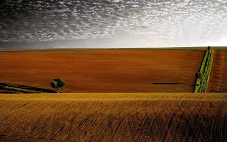Картинки поля, холмы, деревья, дерево