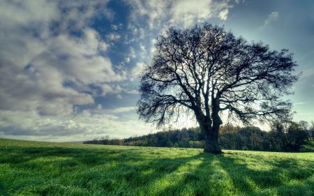 Заставки поле, дерево, пейзаж