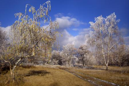 Заставки оснеь, деревья, дорога, иней