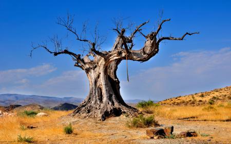 Обои Природа, пустыня, дерево, коряга