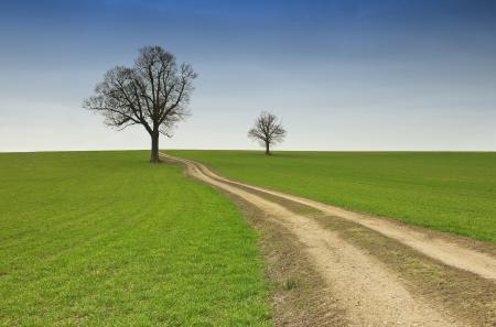 Обои дорога, дерево, поле, небо