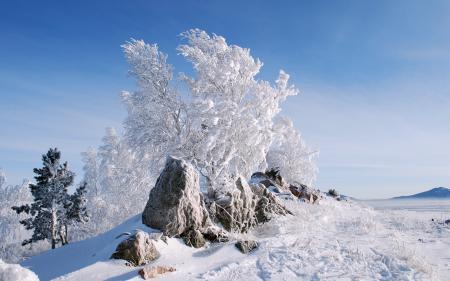 Обои зима, снег, деревья, камни