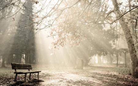 Фотографии парк, туман, утро, деревья