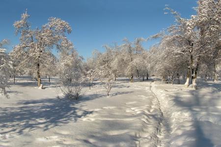 Обои зима, снег, деревья, пейзаж