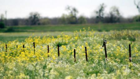 Фото поле, цветы, птица, природа