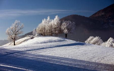 Фотографии зима, снег, деревья, забор