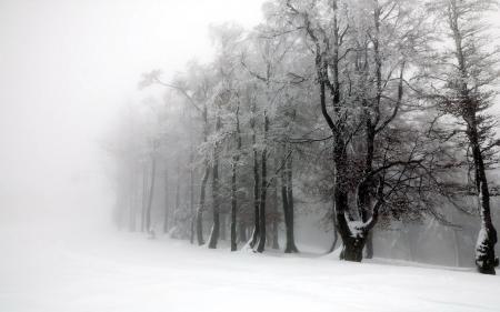 Заставки зима, деревья, туман, пейзаж