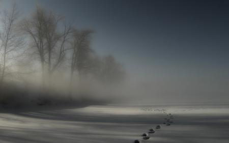 Картинки зима, снег, туман, следы