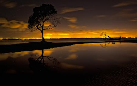 Заставки ночь, звезды, озеро, дерево