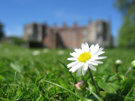 Картинки поляна, цветы, замок, Mottisfont Abbey