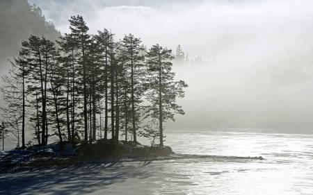Фотографии утро, озеро, туман, деревья