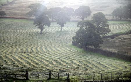 Картинки поле, туман, природа, пейзаж