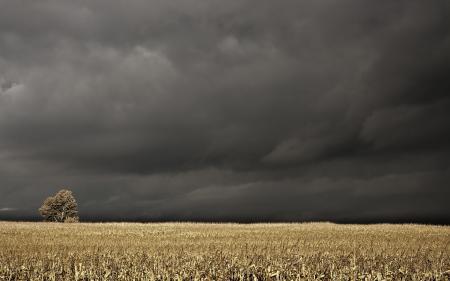 Фото поле, тучи, пейзаж