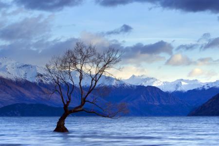 Обои озеро, дерево, пейзаж