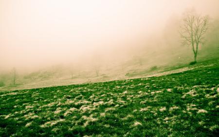 Фотографии поле, туман, пейзаж