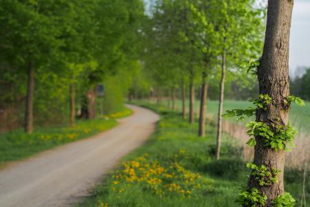 Фотографии дерево, дорога, природа