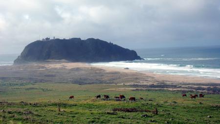Фото коровки, луг, трава, море