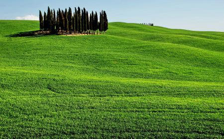 Фото поля, зелень, небо, деревья