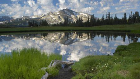 Заставки озеро, вода, трава, коряга