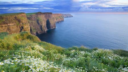 Фото берег, ромашки, ирландия