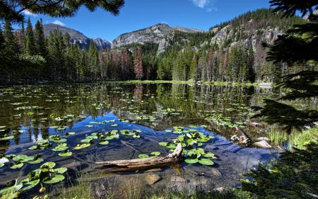 Фото природа, горы, лес, водоем