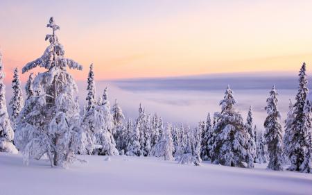 Заставки пейзаж, природа, снег, зима