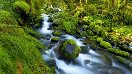 Фото камни, река, папоротник, мох