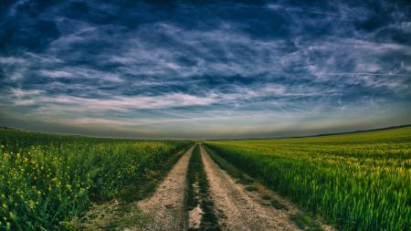 Обои небо, поле, дорога, сурепка