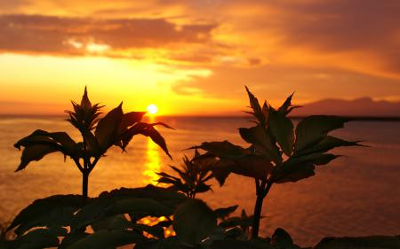 Обои пейзаж, природа, рассвет, солнце