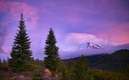 Картинки горы, лес, туман