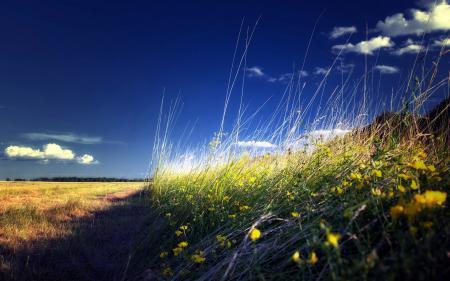Фото поле, небо, трава, пейзаж