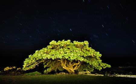 Фотографии ночь, небо, звезды, дерево