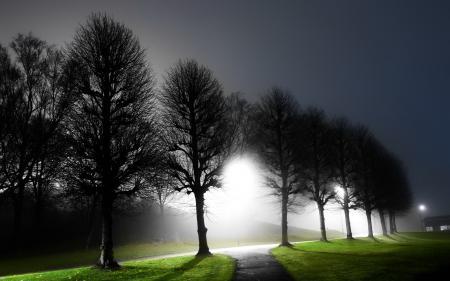 Обои ночь, деревья, свет