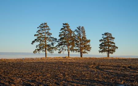 Заставки поле, деревья, утро, природа