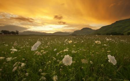 Фотографии закат, поле, травы
