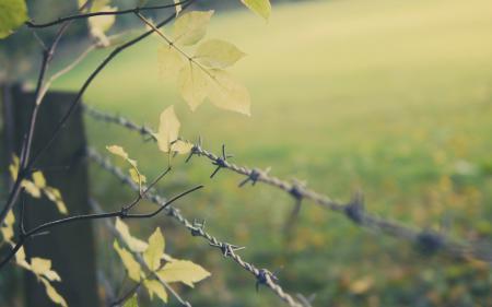 Обои проволока, забор, дерево, листья