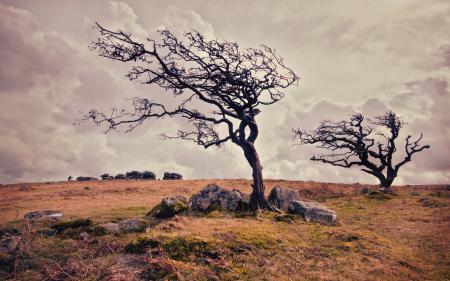 Обои поле, дерево, природа, пейзаж