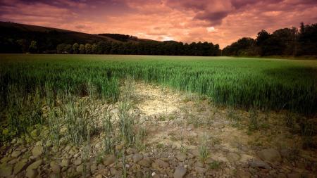 Фото поле, небо, природа, пейзаж
