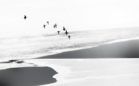 Обои птицы, море, туман, пейзаж