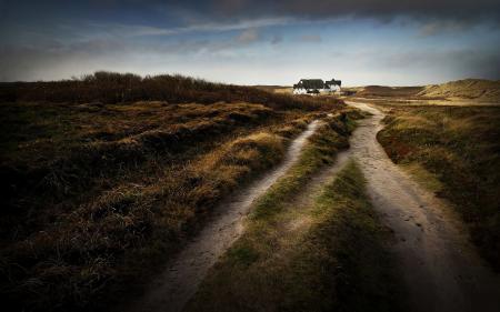Картинки дорога, травы, пустошь, небо