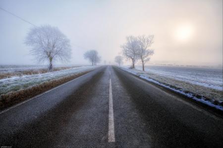 Обои дорога, туман, деревья, пейзаж
