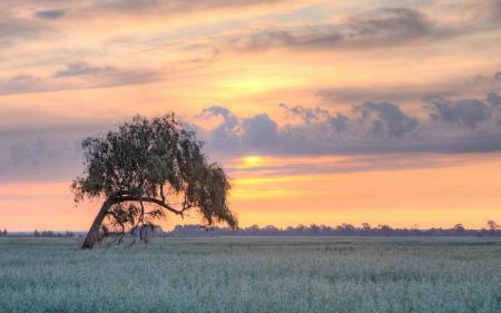 Фото поле, дерево, закат