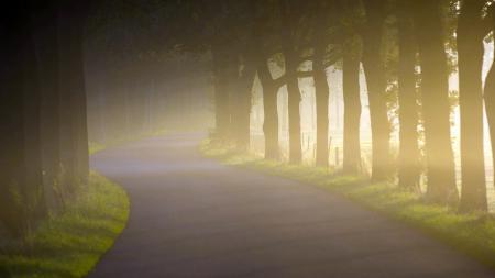 Обои утро, дорога, туман