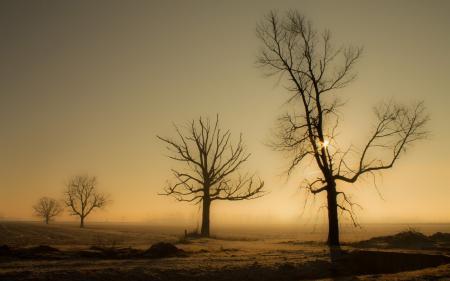 Фотографии закат, деревья, поле, пейзаж