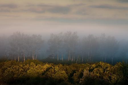 Фото утро, поле, деревья, туман
