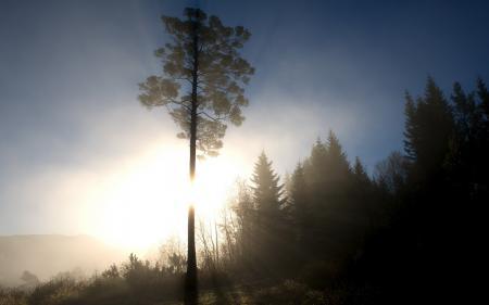 Картинки утро, лес, свет, пейзаж
